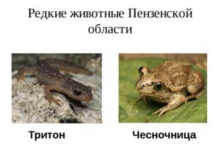 Редкие животные Пензенской области Тритон Чесночница