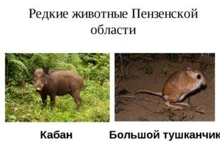 Редкие животные Пензенской области Кабан Большой тушканчик