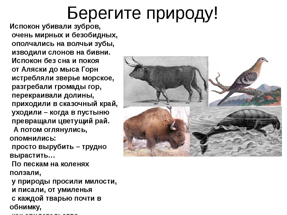Берегите природу! Испокон убивали зубров, очень мирных и безобидных, ополча...