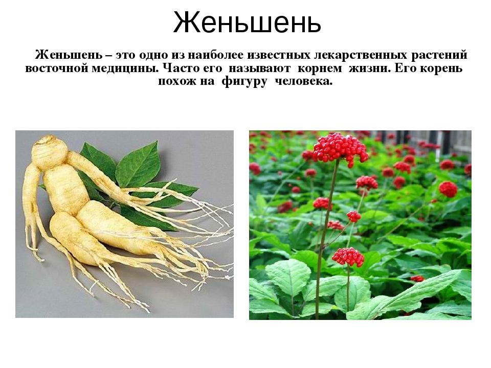 Женьшень Женьшень – это одно из наиболее известных лекарственных растений вос...