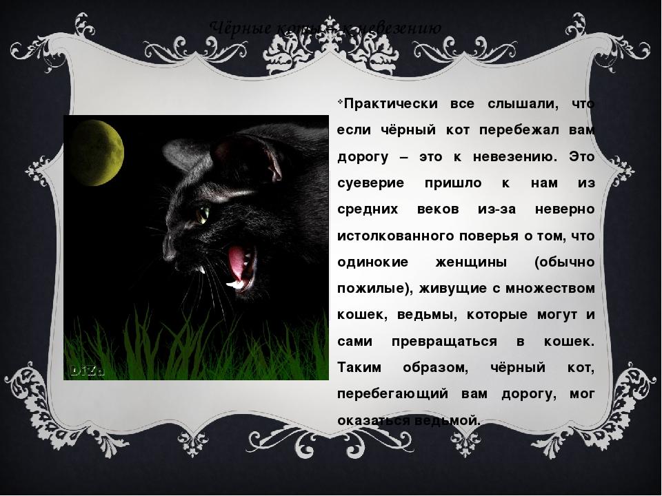 Чёрные коты – к невезению Практически все слышали, что если чёрный кот перебе...