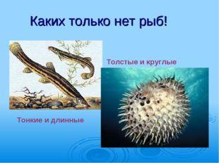 Каких только нет рыб! Тонкие и длинные Толстые и круглые