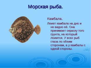 Морская рыба. Камбала. Ляжет камбала на дно и не видно её. Она принимает окра