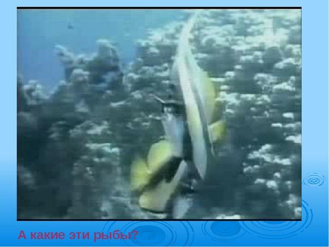 А какие эти рыбы?
