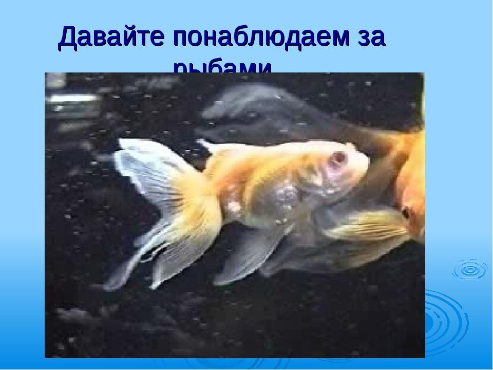 Давайте понаблюдаем за рыбами