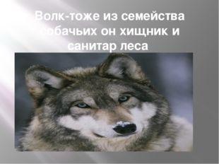 Волк-тоже из семейства собачьих он хищник и санитар леса