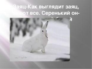 Заяц-Как выглядит заяц, знают все. Серенький он-летом, зимой-белый