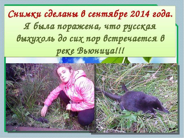 Снимки сделаны в сентябре 2014 года. Я была поражена, что русская выхухоль до...