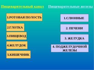 1.РОТОВАЯ ПОЛОСТЬ 2.ГЛОТКА 3.ПИЩЕВОД 4.ЖЕЛУДОК 5.КИШЕЧНИК Пищеварительный кан