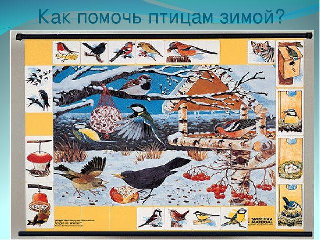 Как помочь птицам зимой? Покормите птиц зимой, пусть со всех концов К вам сле...