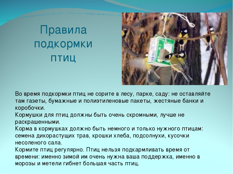 Правила подкормки птиц Во время подкормки птиц не сорите в лесу, парке, саду:...