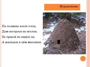 На полянке возле ёлок, Дом построен из иголок.    За травой не виден он,