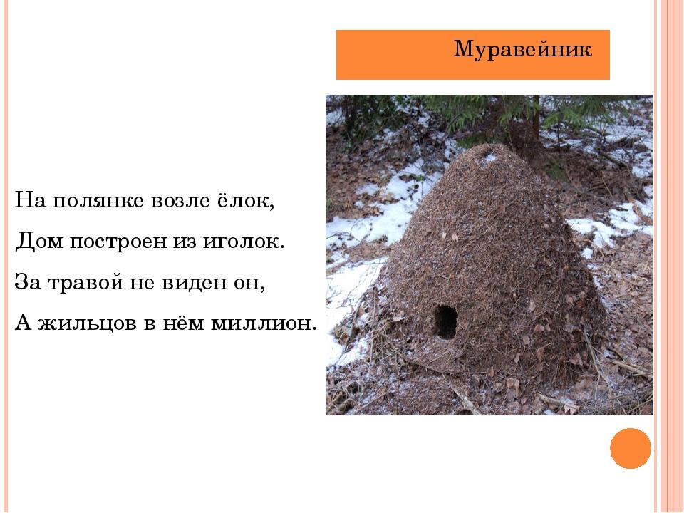 На полянке возле ёлок, Дом построен из иголок.    За травой не виден он, ...