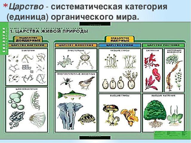 Царство - систематическая категория (единица) органического мира.