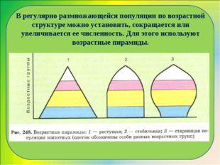 В регулярно размножающейся популяции по возрастной структуре можно установить