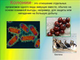 Колонии- это отношение отдельных организмов одного вида живущих вместе, обычн
