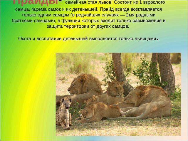 Прайды- семейная стая львов. Состоит из 1 взрослого самца, гарема самок и их...