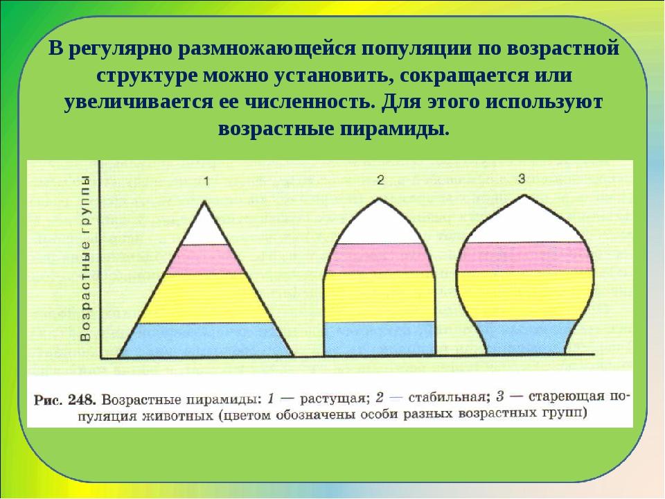 В регулярно размножающейся популяции по возрастной структуре можно установить...