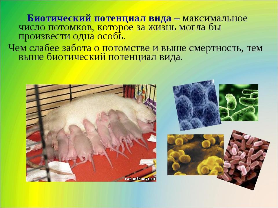 Биотический потенциал вида – максимальное число потомков, которое за жизнь м...