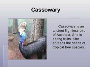 Cassowary  Cassowary is an ancient flightless bird of Australia. She is e