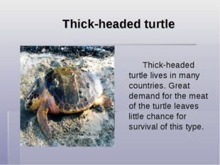 Thick-headed turtle  Thick-headed turtle lives in many countries. Great