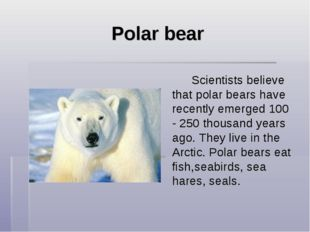Polar bear  Scientists believe that polar bears have recently emerged 100