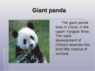 Giant panda The giant panda lives in China, in the upper Yangtze River. Th