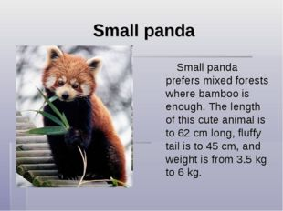 Small panda Small panda prefers mixed forests where bamboo is enough. The len