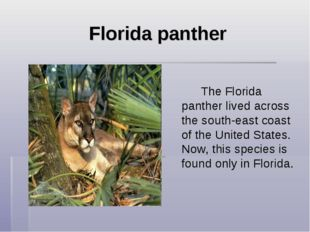 Florida panther  The Florida panther lived across the south-east coast of