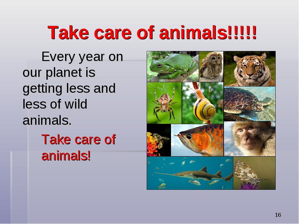* Take care of animals!!!!! Every year on our planet is getting less and le...