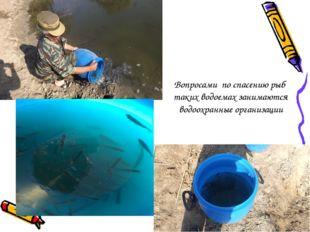 Вопросами по спасению рыб таких водоемах занимаются водоохранные организации