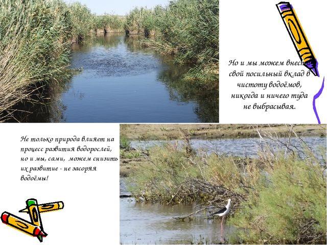 Но и мы можем внести свой посильный вклад в чистоту водоёмов, никогда и ничег...