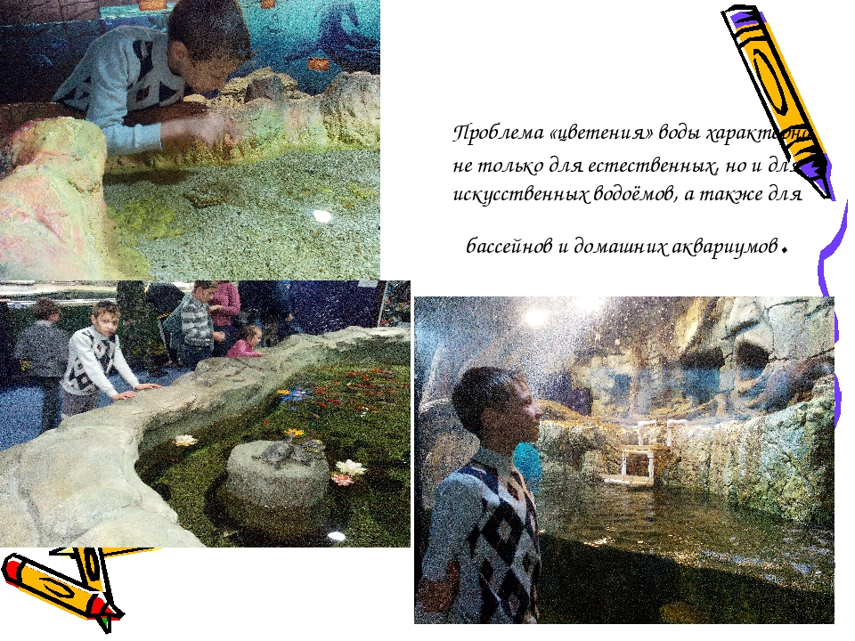 Проблема «цветения» воды характерна не только для естественных, но и для иск...