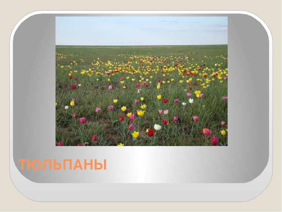 Букет заказ, цветы волгоградской области названиями