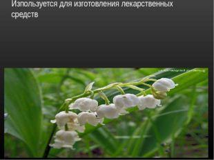 Ландыш травянистое цветковое растение. Изпользуется для изготовления лекарств