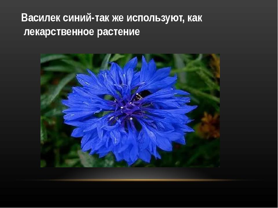 Василек синий-так же используют, как лекарственное растение