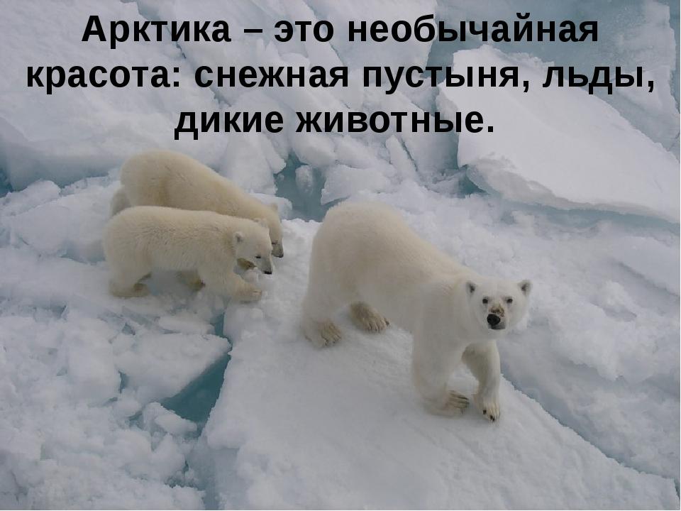 Арктика – это необычайная красота: снежная пустыня, льды, дикие животные.
