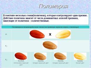 Полимерия В генотипе несколько генов(полигенов), которые контролируют один пр