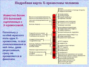 Подробная карта Х-хромосомы человека Известно более 370 болезней сцепленных с
