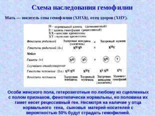 Схема наследования гемофилии Мать — носитель гена гемофилии (XHXh), отец здо