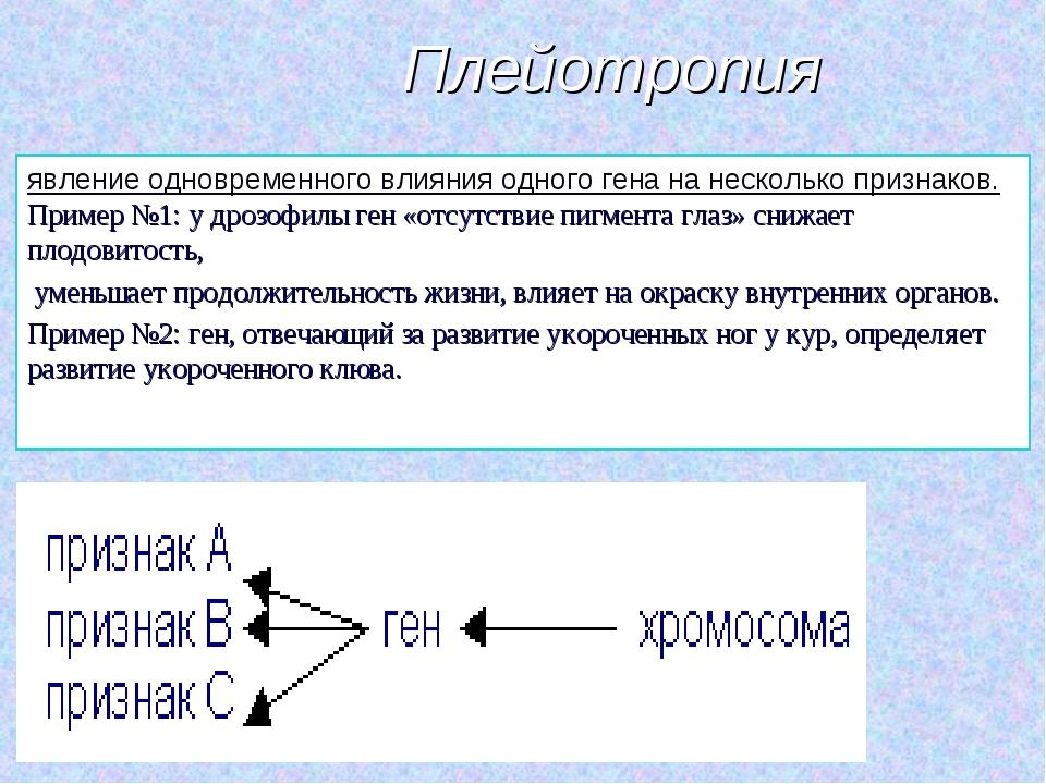 Плейотропия явление одновременного влияния одного гена на несколько признаков...