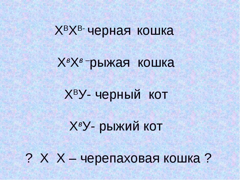 ХВХВ- черная кошка ХвХв –рыжая кошка ХВУ- черный кот ХвУ- рыжий кот ? Х Х – ч...