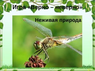 Игра «Верно – неверно» Неживая природа