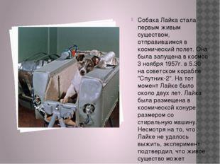 Собака Лайка стала первым живым существом, отправившимся в космический полет