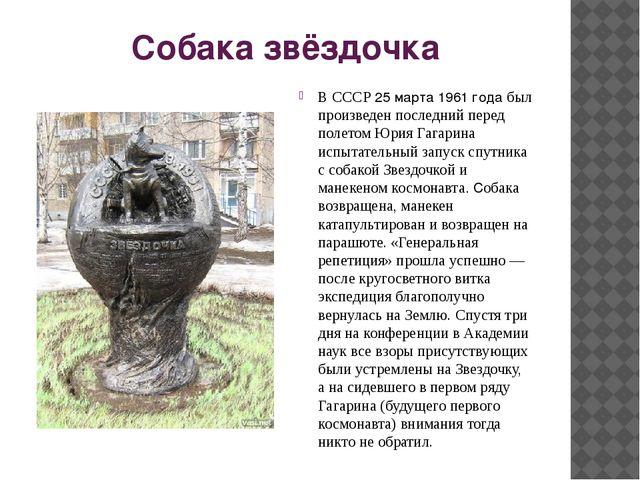 Собака звёздочка В СССР 25 марта 1961 года был произведен последний перед пол...