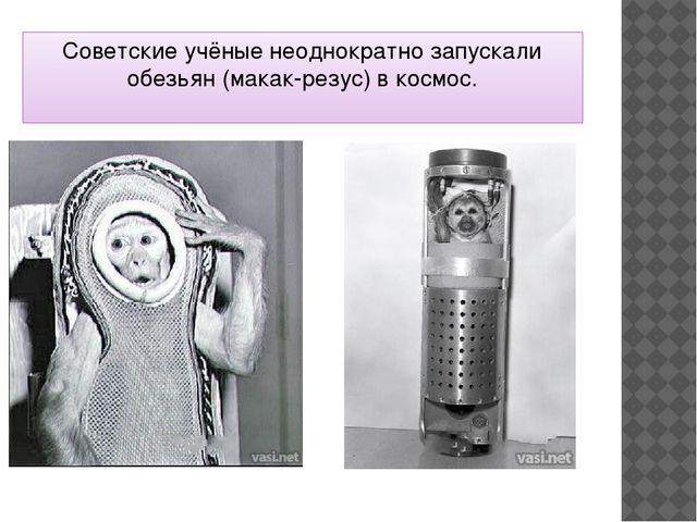 Советские учёные неоднократно запускали обезьян (макак-резус) в космос.