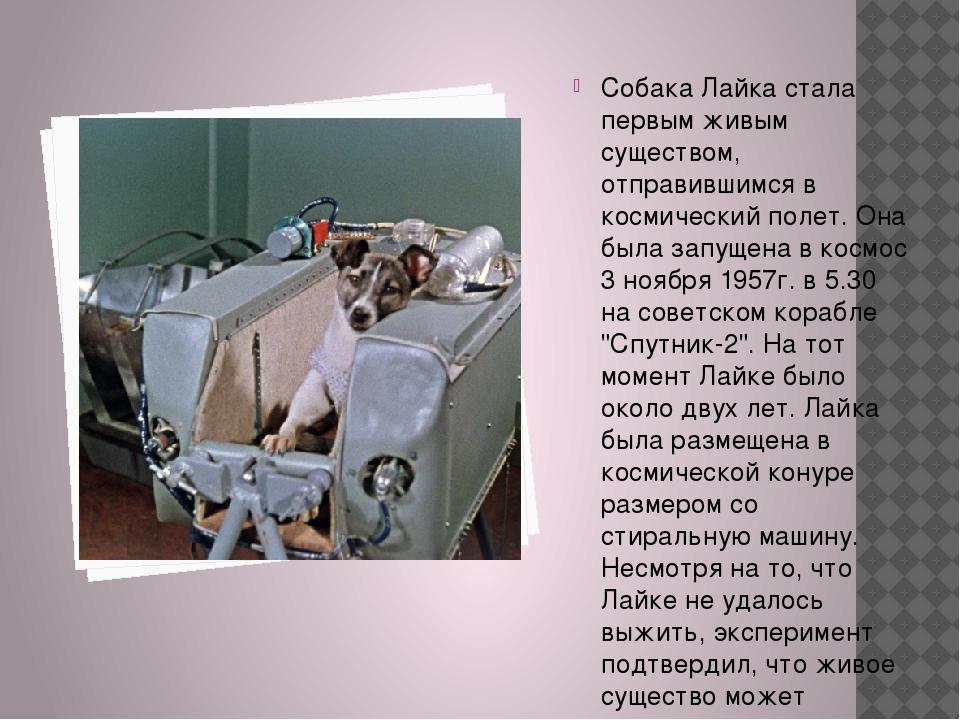 Собака Лайка стала первым живым существом, отправившимся в космический полет...