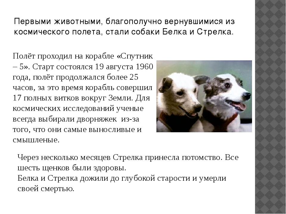 Первыми животными, благополучно вернувшимися из космического полета, стали со...