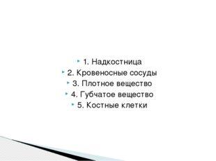 1. Надкостница 2. Кровеносные сосуды 3. Плотное вещество 4. Губчатое вещество
