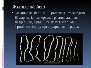 Жыныс жүйесі Жыныс жүйесініңқұрылымы өте күрделі. Бұлар негізінен еркек, ұ